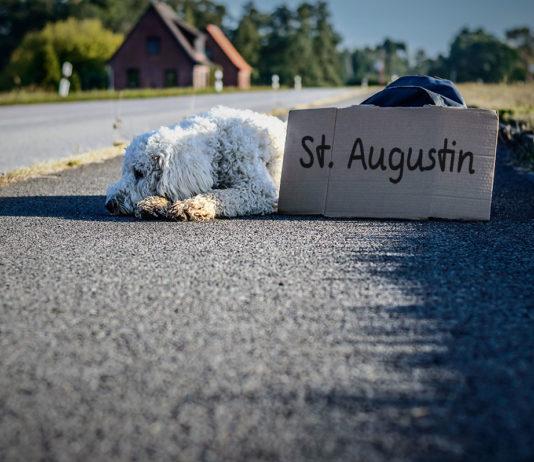 """Ein Hund liegt am Straßenrand, davor ein Pappschild, auf dem """"St. Augustin"""" geschrieben steht."""