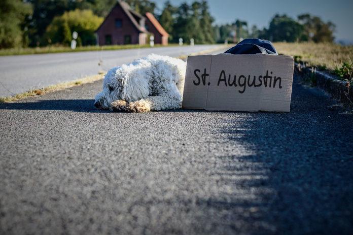 Ein Hund liegt am Straßenrand, davor ein Pappschild, auf dem